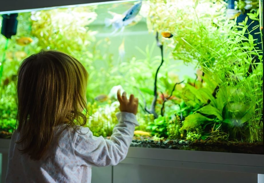 A Step-By-Step Guide To Safely Moving An Aquarium