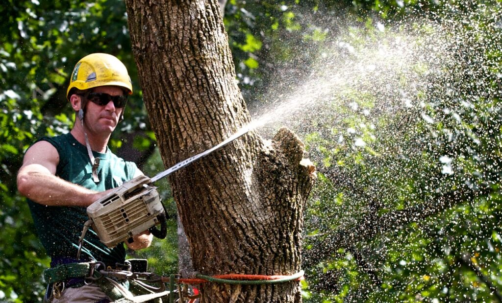 Why We Need To Hire Tree Professional
