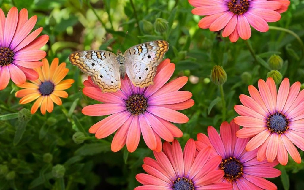 What to Know and Do to Create a Thriving Pollinator Garden